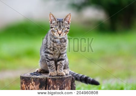Portrait of the rustic cat on a stump in summer