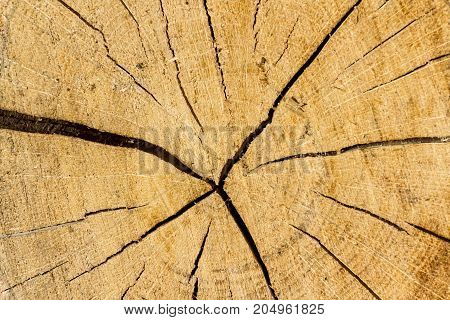 Rough wooden cut texture with cracks, close-up