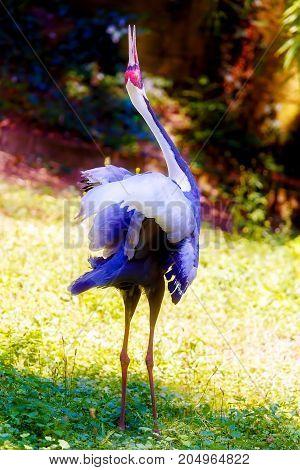 Beautful bird. Blur nature background. Color bird