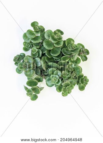Desert Plant On White Background