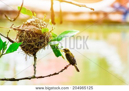 Bird nest on branches stretching over water in abstract blurry background.