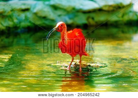 red water with a long beak. Blur background