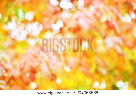 Autumnal natural bokeh for background or backdrop.