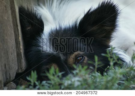 Country Sad Dog