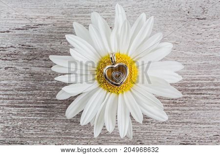 Silver pendant - heart and daisy flower on a wooden surface jewelery for women modern fashion jewels macro retro-style selective focus