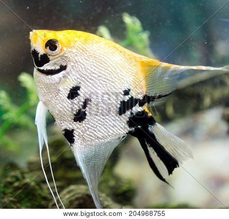 a fish floats in an aquarium at home .
