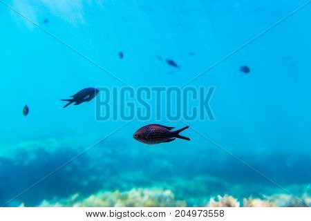 Black fishes in blue sea. Underwater photo with sun rays