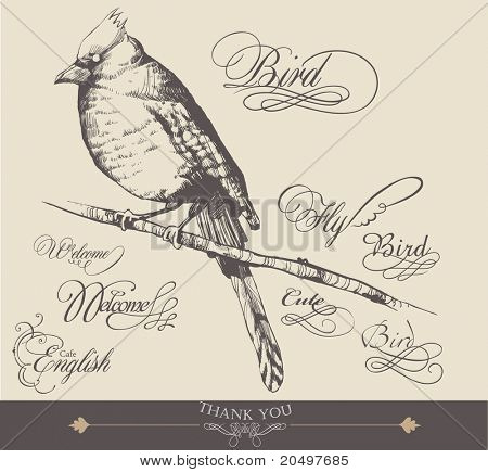 hand-drawn bird with elegance calligraphy design 3 poster