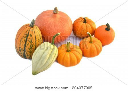 Pumpkins And Squashes Isolated On White
