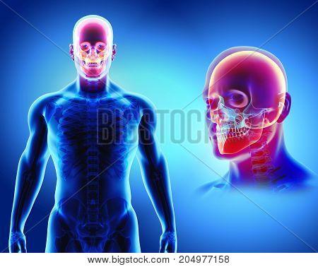 3D Illustration Of Skull Anatomy - Part Of Human Skeleton.