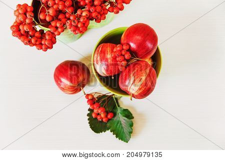 Autumnal composition with apples and rowanberries.white background.fall concept.top view