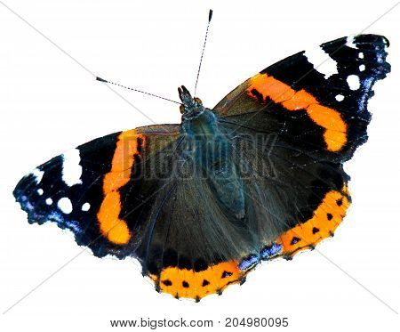 Close-up of beautiful red admiral butterfly on white background.