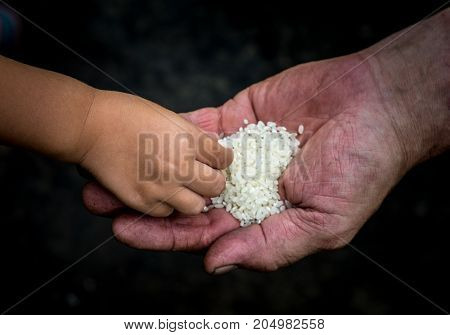 On the palm of the man lies a lot of rice grains. Children's hand picks one grain.