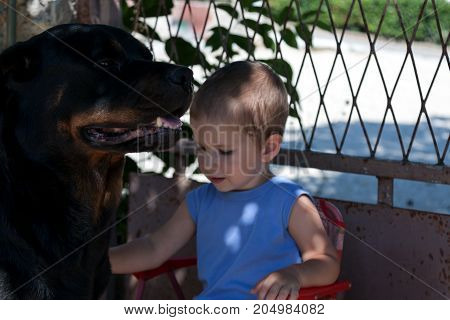 Kid petting a dog while being peacefull and calm next to him