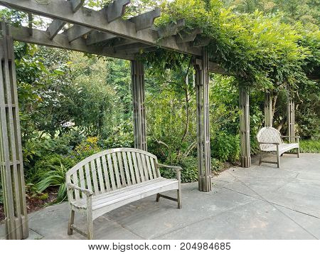 wood benches on cement with green plants on a trellis