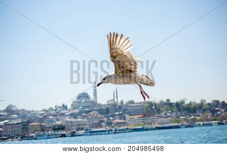Seagull In A Sky With A Mosque Background