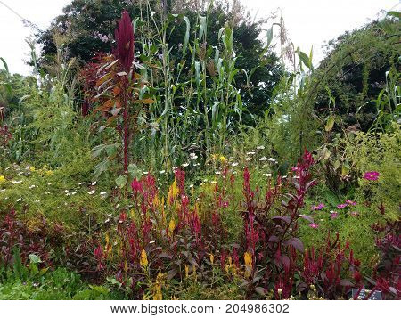many red and yellow plants with green grasses