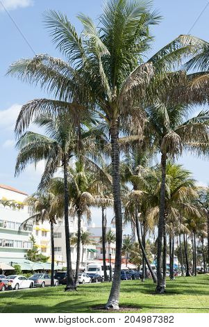 Famous Miami Beach Ocean Drive that stretches along the beach and the park (Florida).