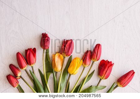 Tulips bouquet. Celebration background closeup. International women's day, colorful spring flowers on white top view with free space, tenderness concept
