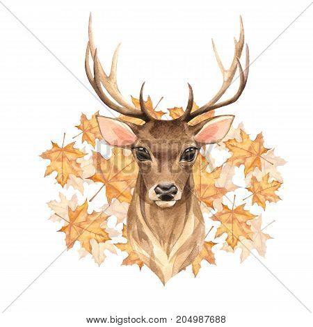 Noble deer. Autumn. Hand painted watercolor illustration