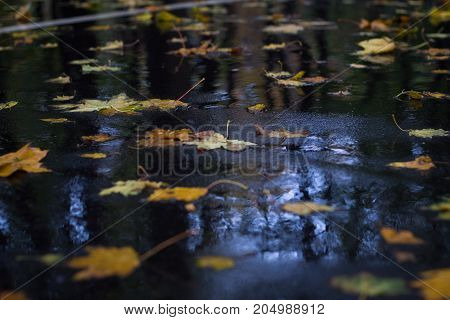 Yellow Leaves On Wet Asphalt In Autumnal Rainy Forest