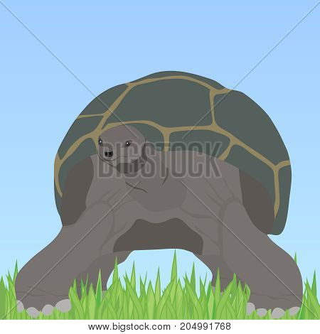 Turtle, Turtle With Shell In The Grass
