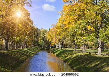 river in the autumn park in sunny day