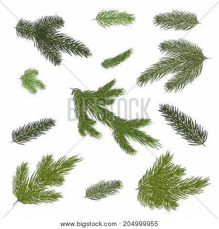 A set of different Christmas tree branches. Isolated. Close-up. Set for Christmas decor.