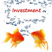 investment invest finance financial or business concept with goldfish on white poster