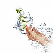 young sprout in the human hand in the water flow. Symbol of environmental protection. poster