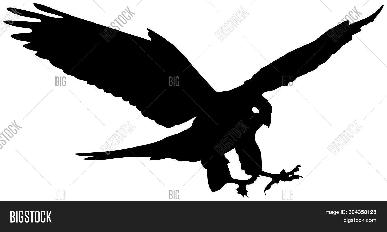 Falcon Birds Prey Vector Photo Free Trial Bigstock