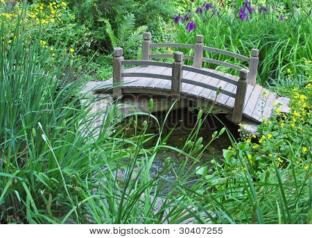 Arched bridge over stream in wetland garden