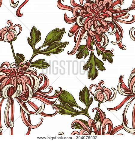 Seamless Pattern With Hand Drawn Colored Japanese Chrysanthemum