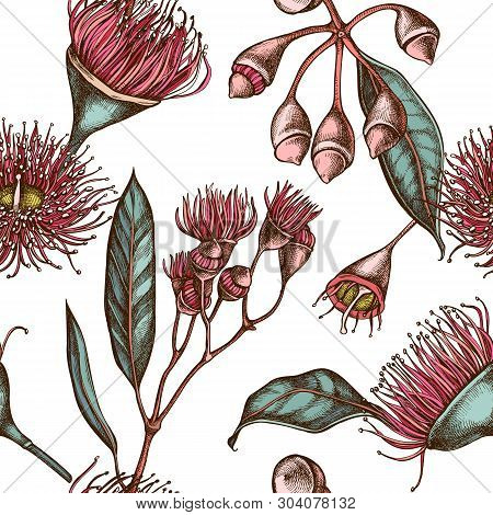 Seamless Pattern With Hand Drawn Colored Eucalyptus Flower