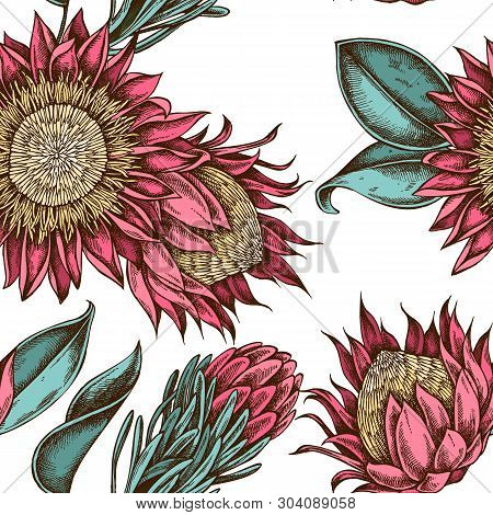 Seamless Pattern With Hand Drawn Colored King Protea