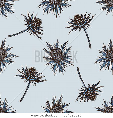 Seamless Pattern With Hand Drawn Colored Blue Eryngo
