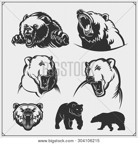 Grizzly Bear, Polar Bear, Brown Bear Silhouettes And Illustrations. Labels, Emblems And Design Eleme