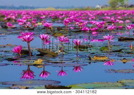 The View Of Red Lotus Lake-talay Bua Daeng (nong Han Red Lotus Lake),udon Thani,thailand In The Beau