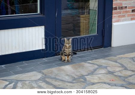 Tabby Cat With Green Eyes Sitting And Watching The World Go By.  Stray Cat Sitting On Sidewalk In Ha