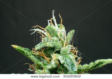 Cbd Thc Pot  Marijuana Image & Photo (Free Trial) | Bigstock