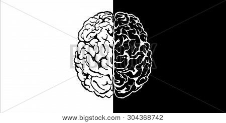 Creative Black And White Brain Drawing. Mind Concept. 3d Rendering