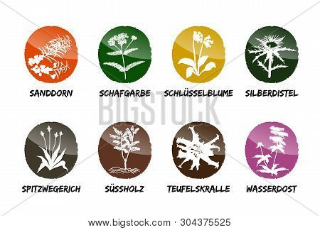 Herbal Medicinal Vector Set Natural Garden Beet Refine