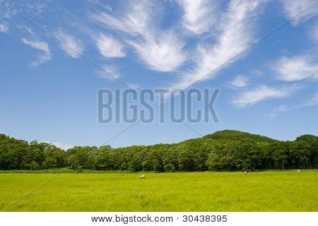 Summer. Cow eat in a field.