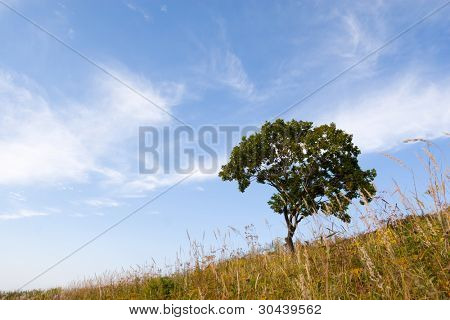 Lonely tree(oak) on a slope of a hill. Autumn.