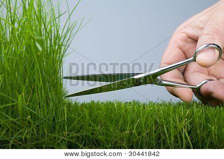 The hand mower cutting scissors a grass (natural)