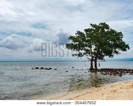 Tree On The Beach In Tinito, A Village In Maasim In The Sarangani Province On Mindanao, The Southern