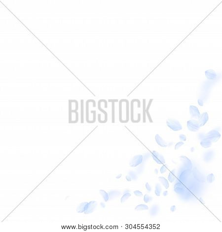 Light blue flower petals falling down. Fetching romantic flowers corner. Flying petal on white square background. Love, romance concept. Alive wedding invitation. poster
