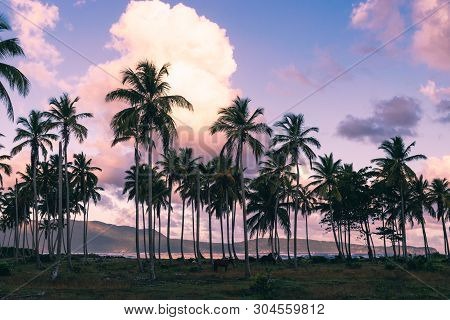 Sunset In Tropical Nature Background. Palm Trees Silhouettes Background. Tropical Nature In Sunset.