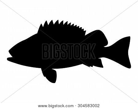 Vector Illustration Of Black Silhouette Of Sea Bass. Isolated White Background. Seabass Logo Icon, S