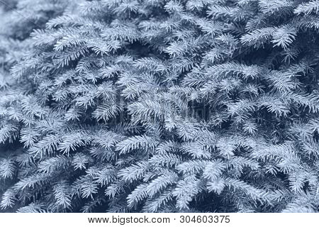 Background of Christmas tree branches. Skyway color. - Image poster